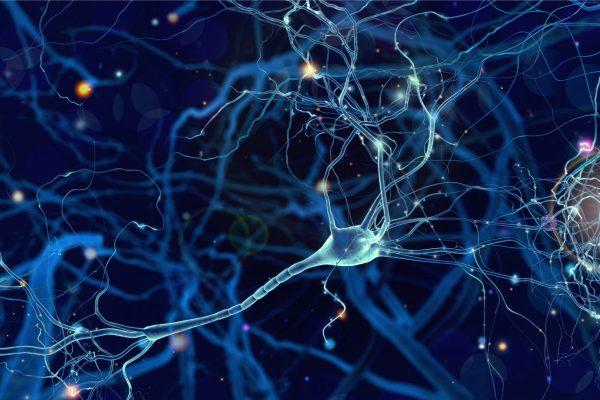 shutterstock_Neuronen original