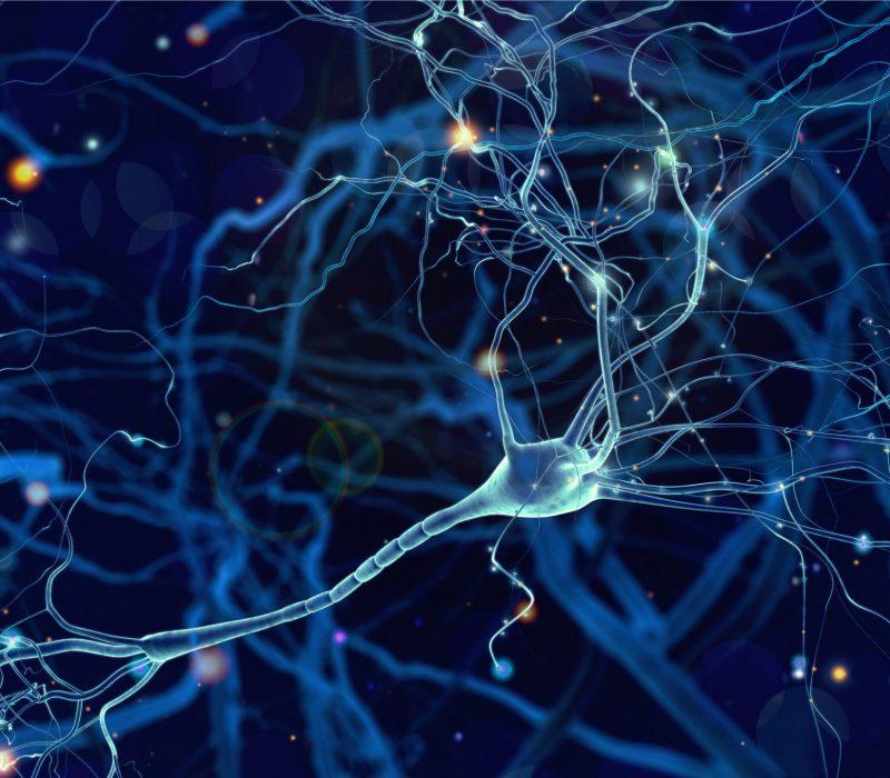 Nervenzellen mit Synapsenverbindung